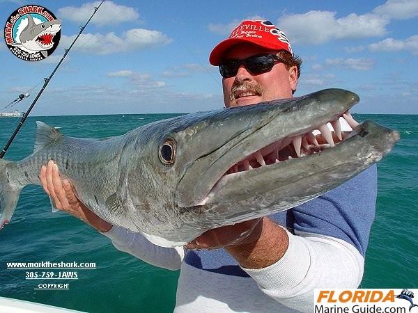 mark_the_shark15