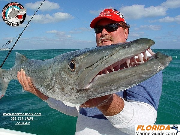 Florida marine photo gallery mark the shark for Shark fishing in florida